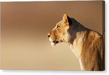 Lioness Portrait Canvas Print by Johan Swanepoel