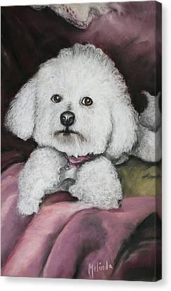 Lisa Bichon Pastel Canvas Print by Melinda Saminski