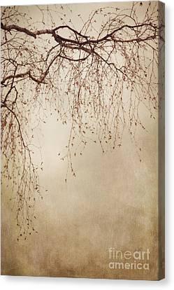 Listen Closely  Canvas Print by Priska Wettstein