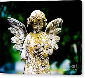 Little Angel Canvas Print by Sonja Quintero