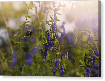 Little Bee In Flight Canvas Print by Toni Hopper