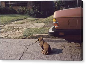Little Brown Dog Canvas Print by John Hines