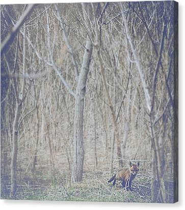 Little Fox In The Woods 2 Canvas Print by Carrie Ann Grippo-Pike