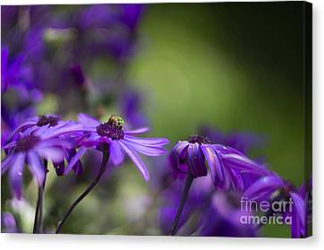 Little Green Bug Canvas Print by Carrie Cole