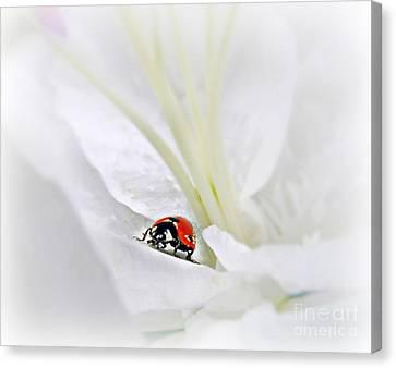 Little Ladybug Canvas Print by Morag Bates
