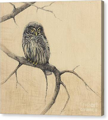Little Owl Canvas Print by Lori  McNee