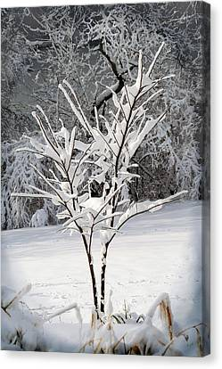 Little Snow Tree Canvas Print by Karen Adams