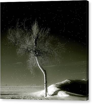 Little Tree Canvas Print by Gothicolors Donna