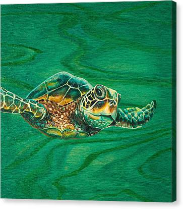 Little Turtle Canvas Print by Emily Brantley