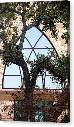 Live Oak In Front Of Church Window Canvas Print by Linda Phelps