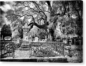Living Cemetery Canvas Print by John Rizzuto