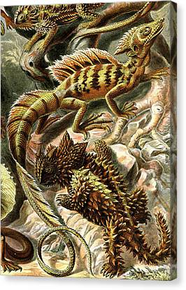 Lizard Detail II Canvas Print by Unknown