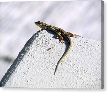 Lizard Canvas Print by Ramona Matei
