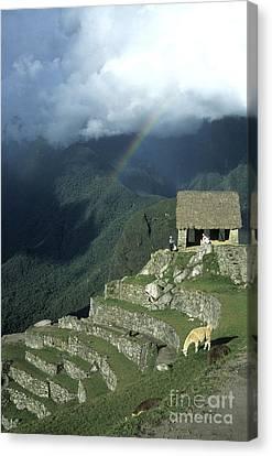 Llama And Rainbow At Machu Picchu Canvas Print by James Brunker