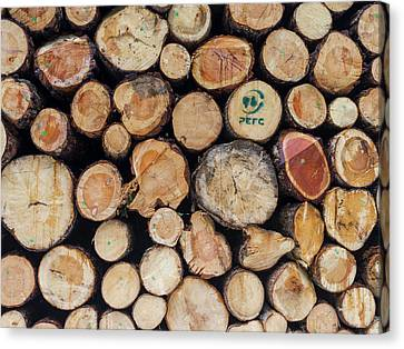 Logs Harvested From Sustainable Canvas Print by Martin Zwick