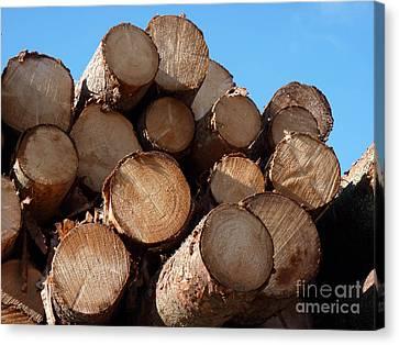 Logs In Sunlight  Canvas Print by Kerstin Ivarsson
