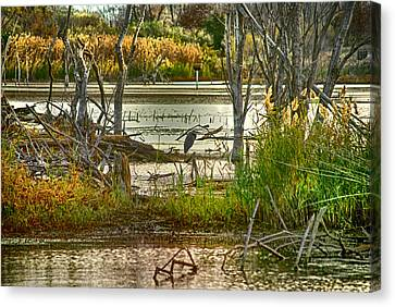 Lone Blue Heron In Fall Canvas Print by Kimberleigh Ladd