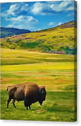 Lone Buffalo Canvas Print by Jeff Kolker