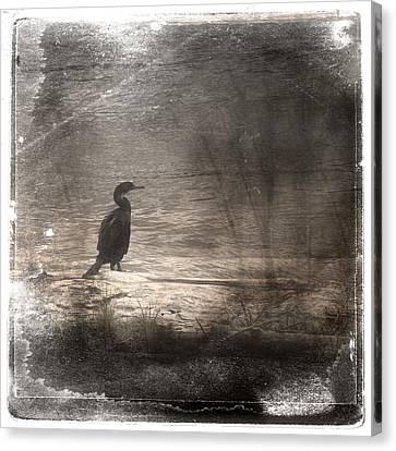 Lone Cormorant Canvas Print by Carol Leigh