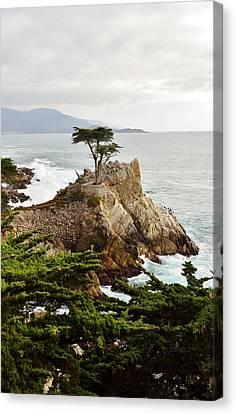 Lone Cypress Canvas Print by Barbara Snyder