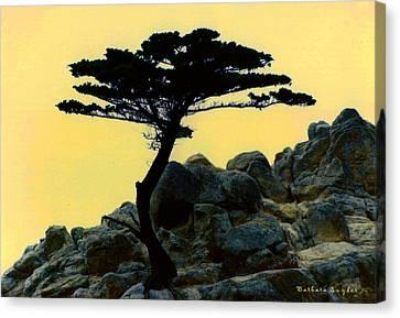 Lone Cypress Companion Canvas Print by Barbara Snyder