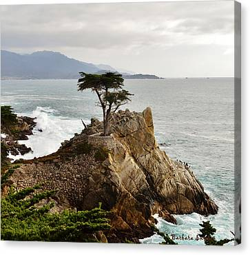 Lone Cypress Detail Canvas Print by Barbara Snyder