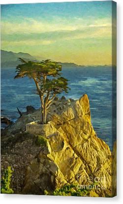 Lone Cypress Tree Canvas Print by Sheldon Kralstein