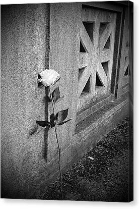 Lone Rose Canvas Print by HW Kateley