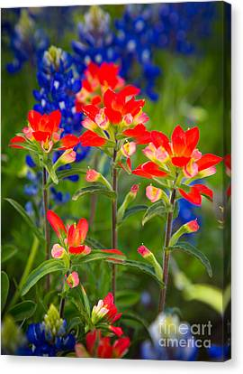 Lone Star Blooms Canvas Print by Inge Johnsson