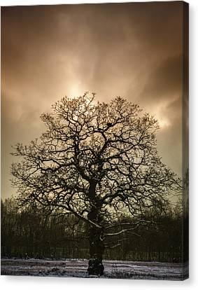 Lone Tree Canvas Print by Amanda Elwell