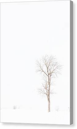 Lone Tree In Snowstorm Canvas Print by Randy Steele