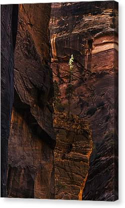 Lone Tree In The Canyon Canvas Print by Andrew Soundarajan