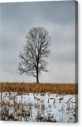 Lone Tree In Winter Canvas Print by Dan Sproul