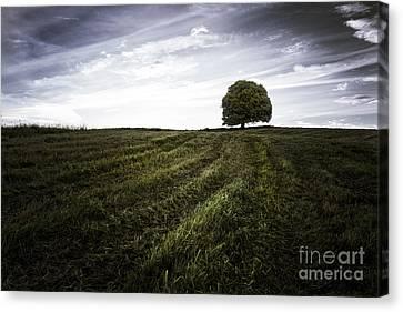 Lone Tree  Canvas Print by John Farnan