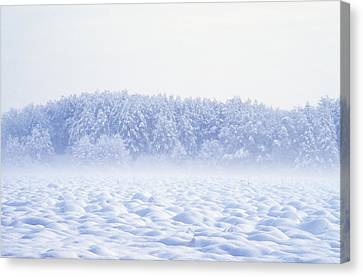 Loneliness In Winter Canvas Print by Patrick Kessler