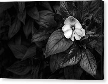 Lonely 1 Canvas Print by Jon Glaser