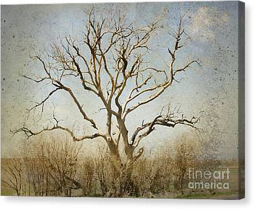 Lonely Canvas Print by Betty LaRue