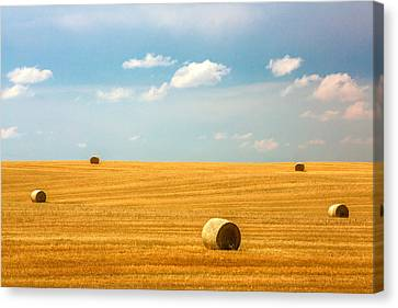 Lonely Fields Canvas Print by Todd Klassy