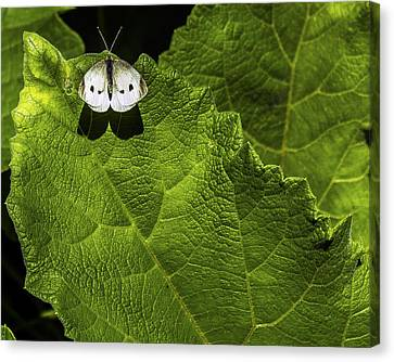Lonely On A Leaf Canvas Print by Tim Buisman
