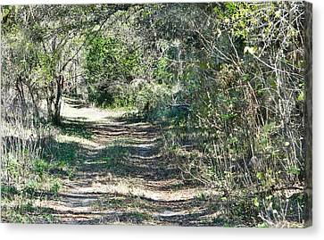 Lonely Road Canvas Print by Dennis Dugan