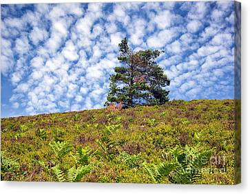 Lonely Tree Canvas Print by Adrian Evans