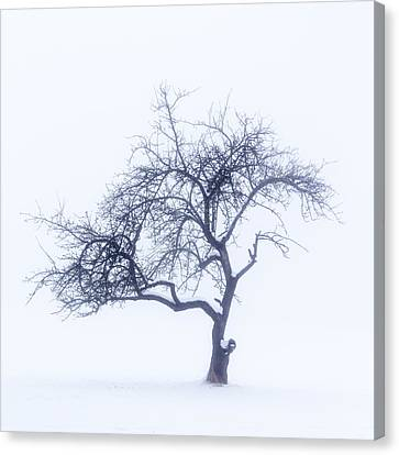 Lonely Tree In The Fog Canvas Print by Aldona Pivoriene