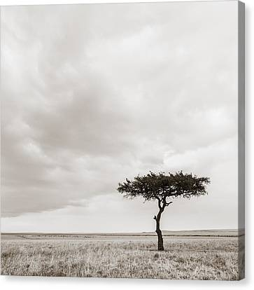 Lonely Tree Masai Mara Kenya Canvas Print by Regina Mueller