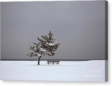 Lonesome Winter Canvas Print by Karol Livote