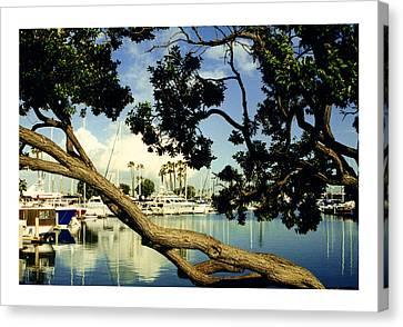 Long Beach Marina Canvas Print by Jack Pumphrey