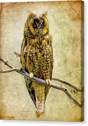 Long Eared Owl Canvas Print by Ray Downing