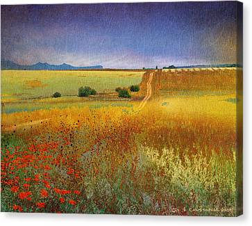 Long Road Late Summer Canvas Print by R christopher Vest