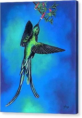 Long Tail Sylph  Canvas Print by Sherri Strikwerda
