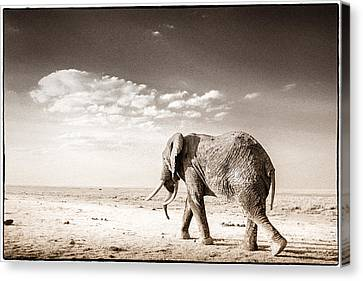 Long Way To Go Canvas Print by Mike Gaudaur