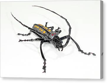 Longhorn Beetle Canvas Print by Tomasz Litwin